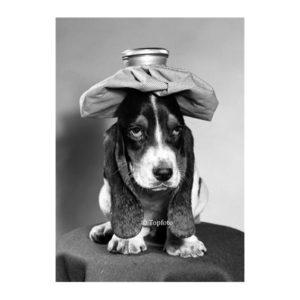 Hond beterschap postkaart